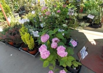 Растения многолетние для сада