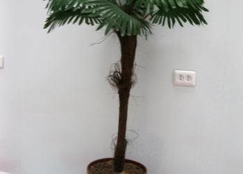 пальму и слоновое дерево