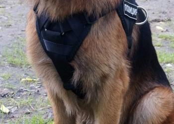 Шлейка для дрессировки служебных собак, новая