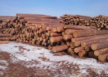 Продам круглый лес из Сибири, (сосна, лиственница)