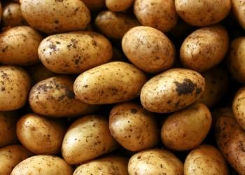 Картофель оптом в Москве