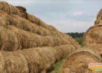 продам на 2018 лето 1500 тюков свежего сена