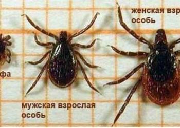 Услуги дезинфекции комары клещи тараканы Солнечногорск