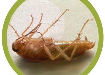 Уничтожение тараканов и клопов с гарантией