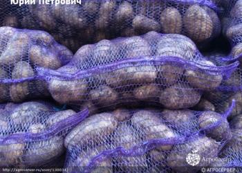 Картофель оптом из Чувашии 7,5 руб/кг