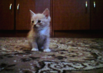 Котята возраст 1 месяц мальчики