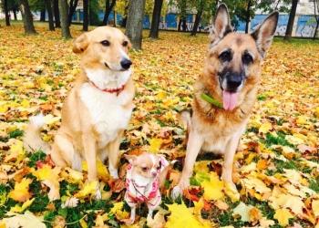 Дрессировка собак всех пород и размеров в городе Сызрань