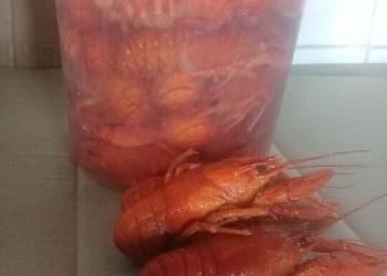 Продам: варено-мороженные раки в Саратове