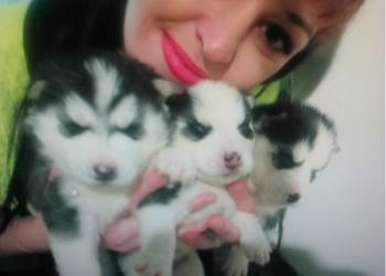 Очаровательные щенки хасята