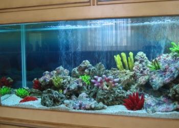 оформление, обслуживание аквариума