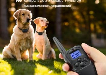 Электроошейник для дрессировки собак