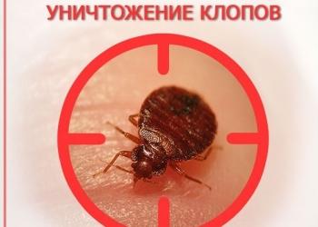 Служба дезинсекции «Дез-Сервис» – уничтожение насекомых в Москве и области