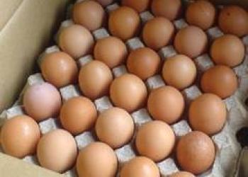 яйцо куриное категории С1 С0 отборная