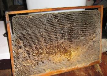 пчеловодная сушь