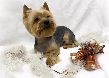 Модные стрижки для собак и кошек