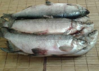 Рыба приполярного Урала
