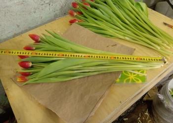 8 Марта без тюльпана - не праздник!