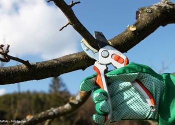 Разнорабочие для обрезки деревьев