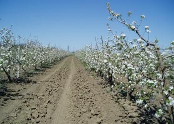 Плoдoнoсящий яблoневый сад в Крыму (Свидетельство, документы готовы)