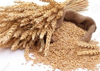 Продам пшеница 5кл. 1500т