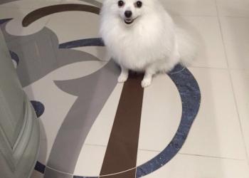 Помогите пожалуйста найти собачку