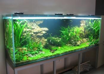 Профессиональное обслуживание вашего аквариума