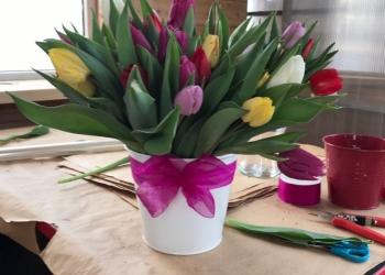 Тюльпаны по 20 рублей к 8 Марта!