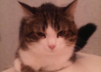 обычный кот или котенок Мурзик