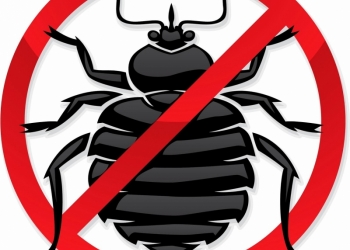 Уничтожение клопов, тараканов, муравьев.