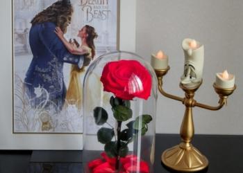 Вечная Роза В Колбе Отличный Подарок На 14 Февраля