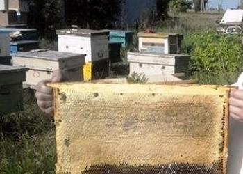 Продам мед урожая 2017 года. Бесплатная доставка