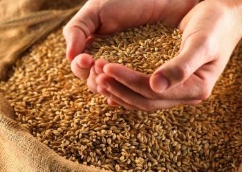 Пшеница в розницу на складе в Верхней Хаве