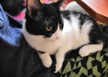 Ласковый котик ищет любящих хозяев