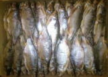 Вобла вяленая икряная, рыба вяленая