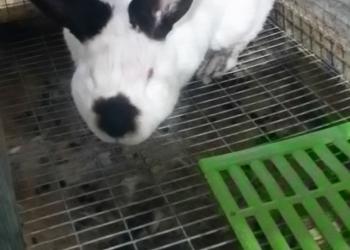 Мясо кролика парное и копченое