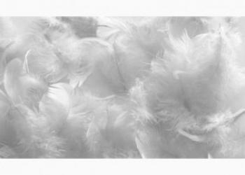 Куплю пух и перо птиц по выгодным ценам