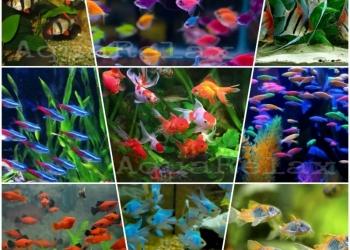 Рыбки разные в аквариум AquaRelax