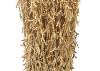 Семена сои Мавка РС1