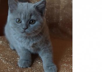 Котята питомника  Mendeleev