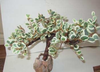 Бонсай лиственный