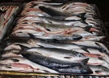 Рыба и морепродукты оптом в кратчайшие сроки!