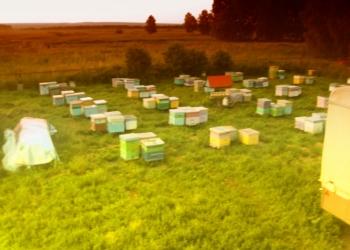 Продам пчел, пасеку, ульи, пчелосемьи