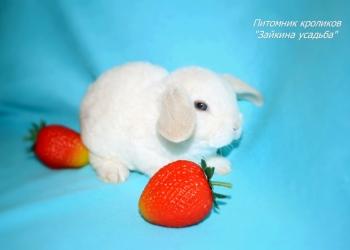 Купить карликового кролика с ДОСТАВКОЙ - питомник кроликов Зайкина усадьба.