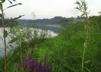 участок в сосновом лесу на берегу реки Мста