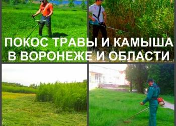 Покос травы Воронеж. Мы косим траву триммером