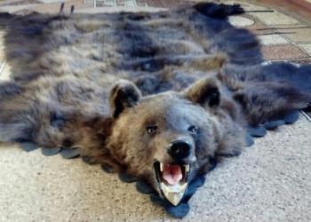Шкура медведя. Ковёр из шкуры медведя