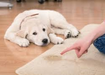 Устраним запах домашних животных в квартире