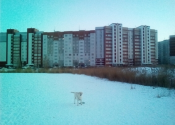 3-к квартира, 62 м2, 3/9 эт.