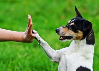 Дрессировка собак Послушание Кинолог Психолог