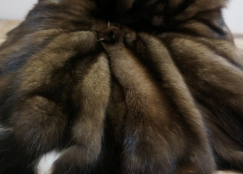 Шкуры соболя дикий баргузинский